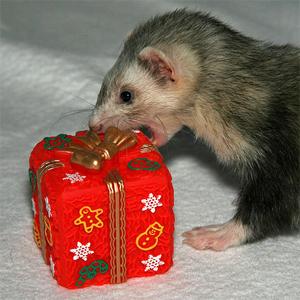 Christmas Ferret.The Amoeba People Christmas Ferret Insomnia Radio Indie